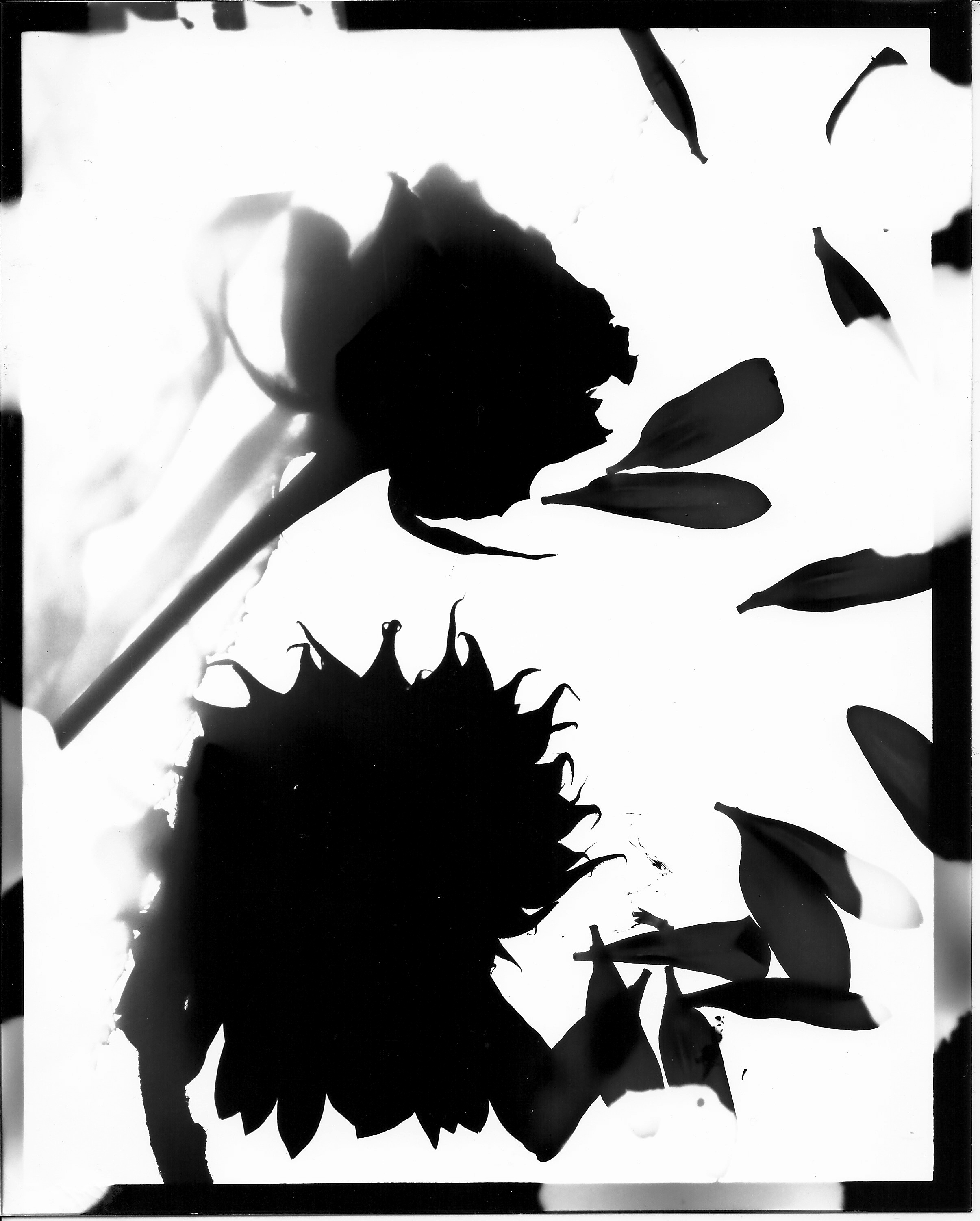 photogram, University of Hartford